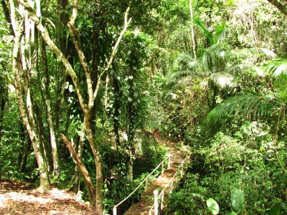 Aspecto geral da Floresta